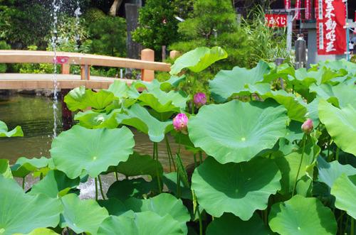 高幡不動20130715-9