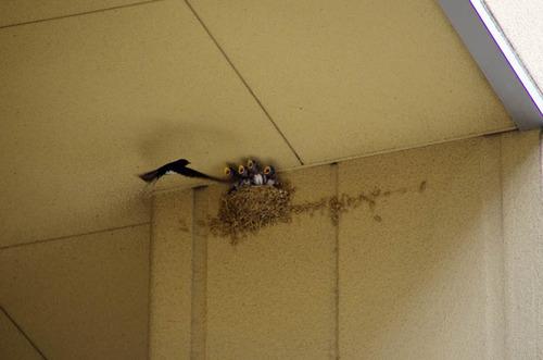 散歩道の鳥たち2013-1