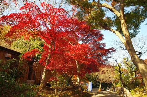 京王百草園201411-2