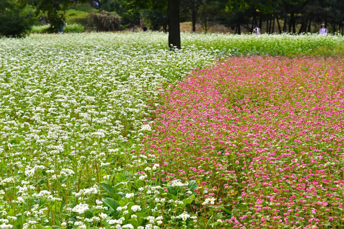 昭和記念公園201709