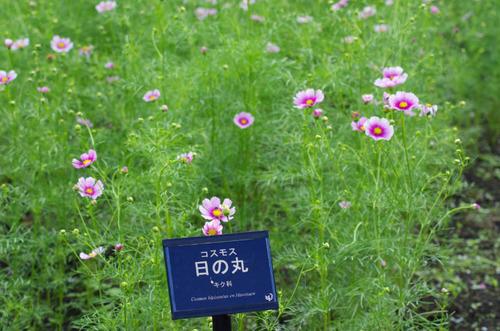 昭和記念公園201209-15