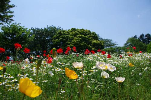 昭和記念公園201205-11