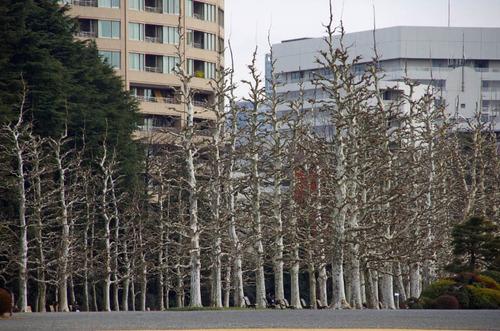 新宿御苑201201-5