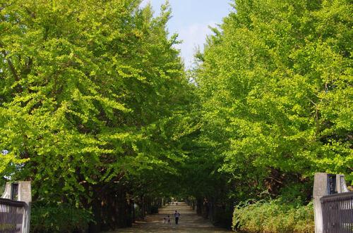 昭和記念公園201110-9