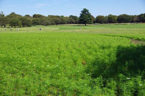 昭和記念公園201109-12