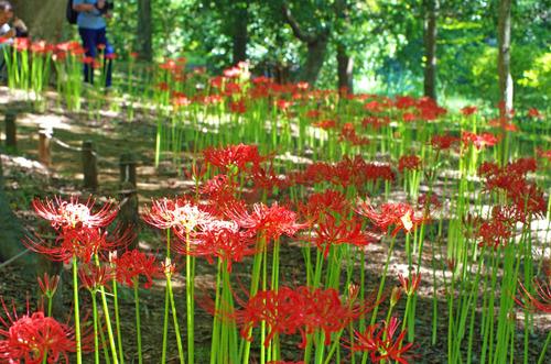 昭和記念公園201409-5