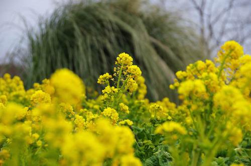 昭和記念公園201201-6