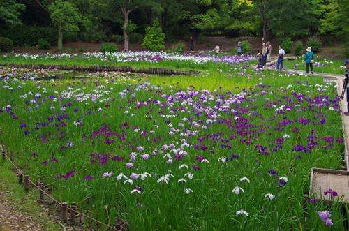 昭和記念公園201106-1