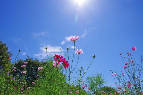 昭和記念公園201109-9
