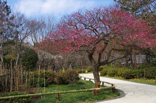 昭和記念公園201102-6
