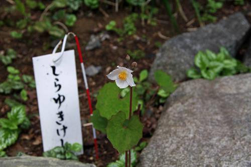高幡不動尊春201004-4