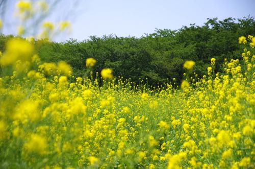 昭和記念公園201405-3
