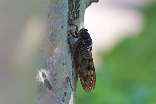 散歩道の虫たち201008-3