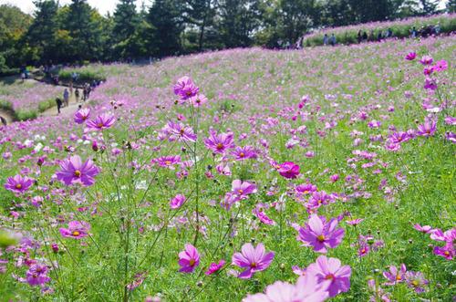 昭和記念公園201305-11