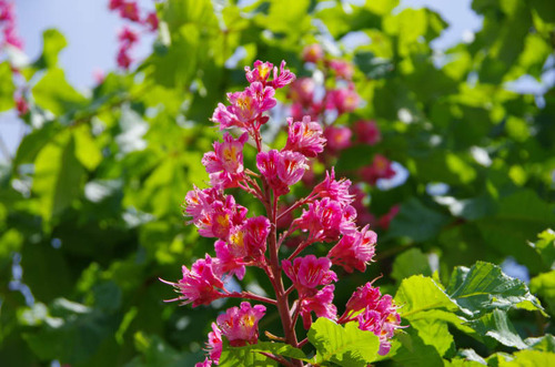 散歩道の花(5月)2012-6