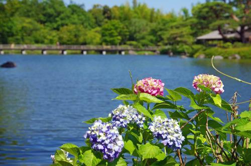 昭和記念公園201406-12