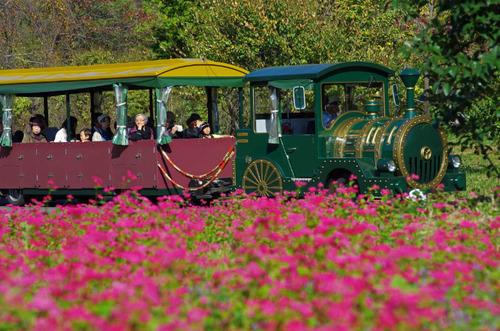 昭和記念公園201411-8