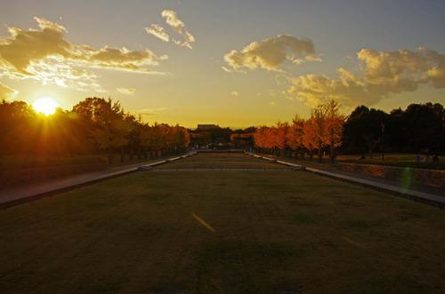 昭和記念公園イチョウ並木201211-12