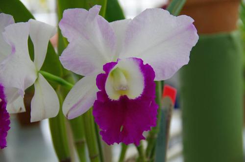 神代植物園2011-7