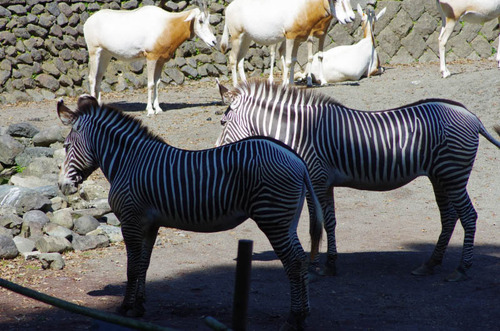 多摩動物公園201109-6