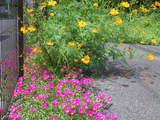 秋の草花-9