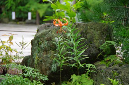 高幡不動尊201107-6