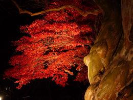 百草園の紅葉-S4