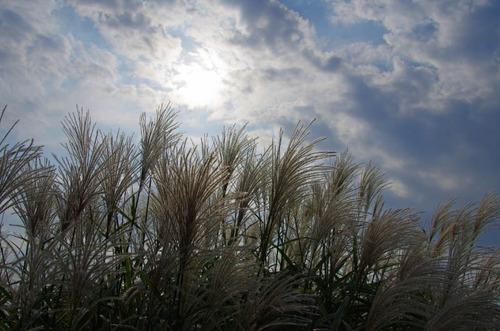 昭和記念公園201110-14