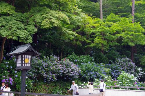 高幡不動あじさい祭り201106-11