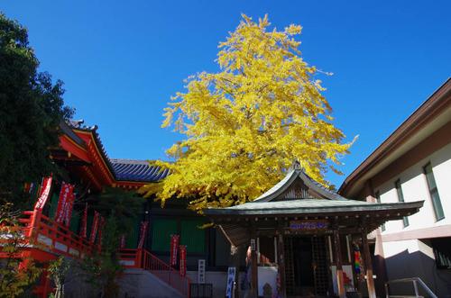 高幡不動尊201311-7