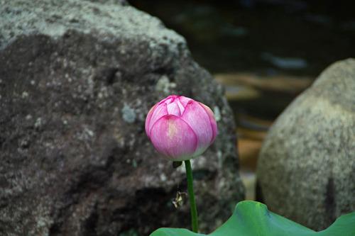 高幡不動尊20100807-3
