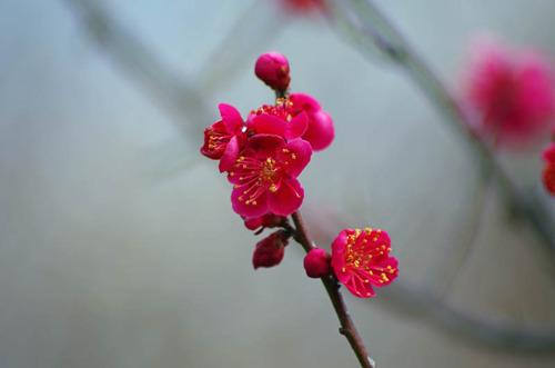 京王百草園20120303-5