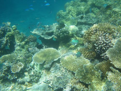 西表島船浮イダの浜201108-14