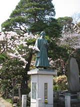 土方桜-1
