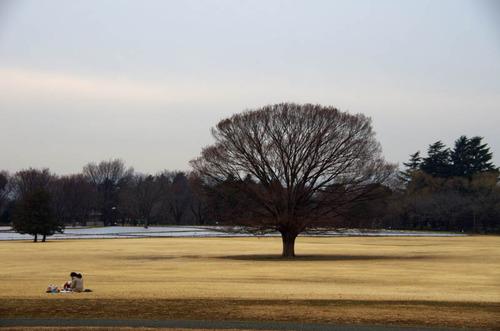 昭和記念公園201201-10