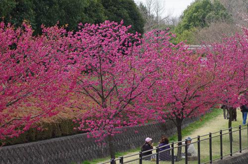 昭和記念公園201204-13