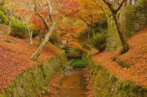 京都東福寺201211-8