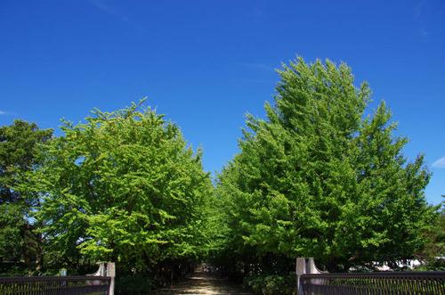 昭和記念公園201109-13