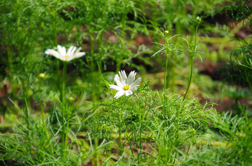 昭和記念公園201109-11