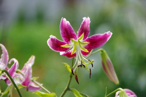 散歩道の夏の花-12