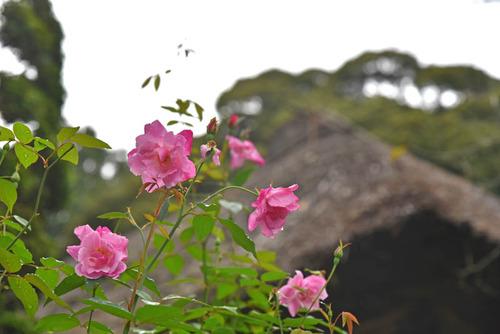 京王百草園201510-2