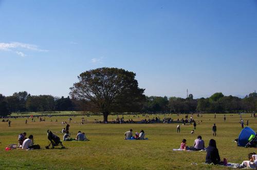 昭和記念公園201201-14