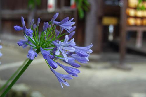 高幡不動201206-5