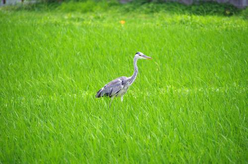 梅雨時の鳥たち2011-14