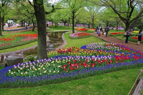 昭和記念公園チューリップ201004-6