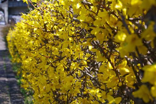 散歩道の春201003-21