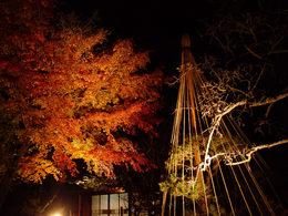 百草園の紅葉-S3