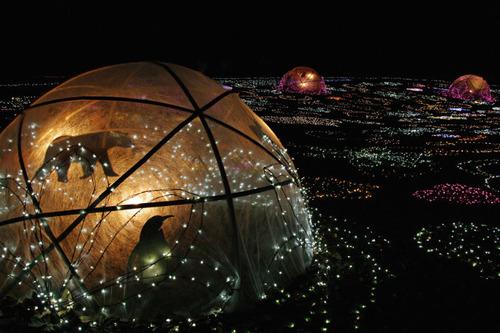 昭和記念公園イルミネーション201012-28