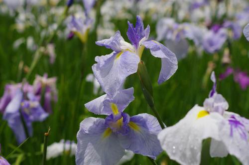 昭和記念公園201206-5