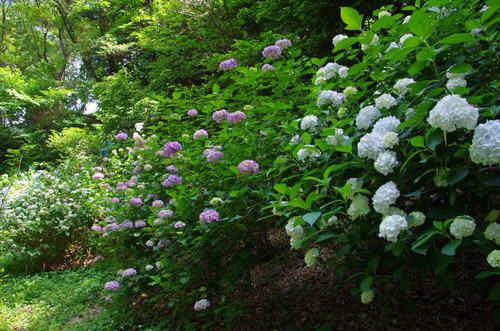 京王百草園201106-8